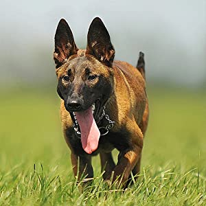 natural anti inflammatory supplements dogs