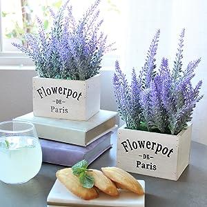 butterfly craze, flowers, lavender