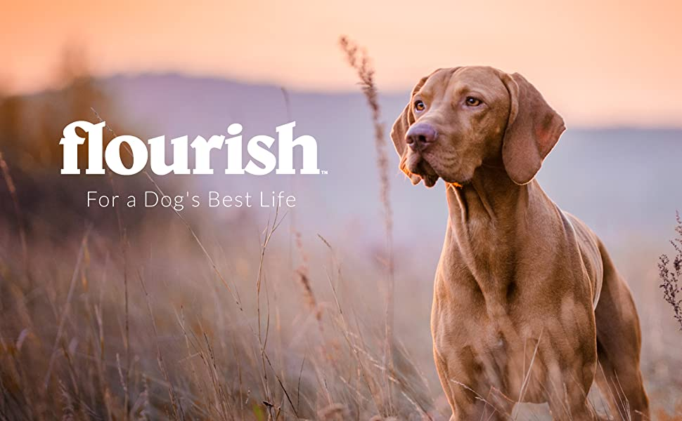 Flourish: For a Dog's Best Life