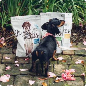 Grain Free, freeze dried dog food, high meat, low carbohydrates, GMO free, limited ingredients,