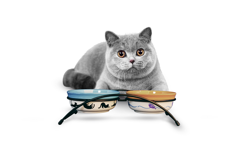 CAT USE