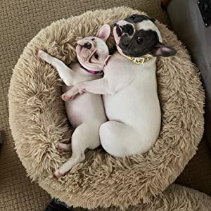 pet bed for small medium dogs