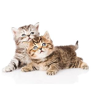no scratch spray cats anti scratch spray cat sofa couch corner protector cat scratch deterrent