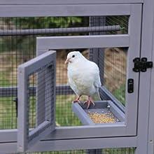 bird platform