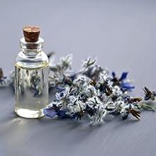 fragranza lavanda