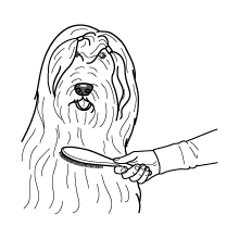 How to brush your pet's hair