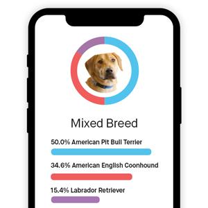 dog breed id breed test canine breed id puppy breed identification dog breed id kit breed size test