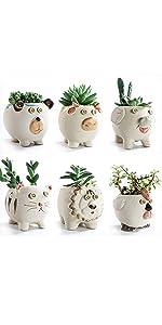 SUN-E 3.7 Inch Animals Cartoon Succulent Plant Pot Set
