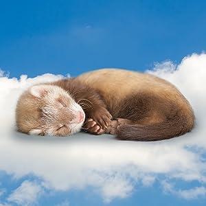 double hammock guinea pig cat hammock stuffed animal hammock eno hammock guinea pig bedding