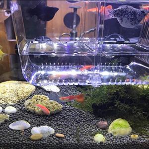 Fish Incubator Isolation Box