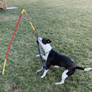 medium dog tug toy