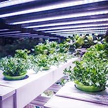 plant grow lights indoor indoor grow lights for plants