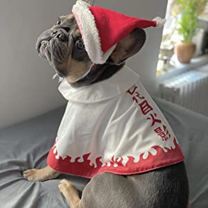 dog bulldog costume naruto seventh hakage