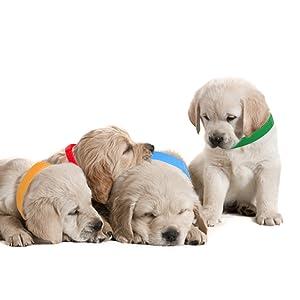 puppy id band