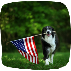 Happy Dog Proud to be Running With American Flag
