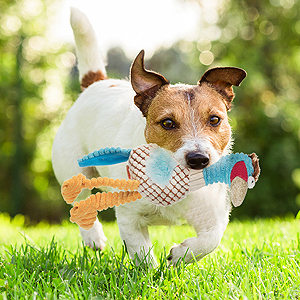 Squeaky Dog Toys, Plush Toys Set, Durable Chew Toys Interactive Training Toys for Puppy Small Medium