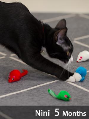 Rattle Cat Toys Mice