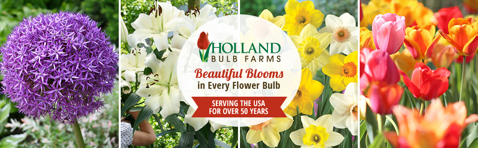 Holland Bulb Farms, Serving the USA for Over 50 Years