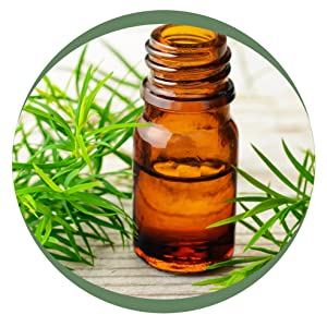 Essential oils, pine oil, floor cleaner, surface, tile cleaner, natural, chemical free
