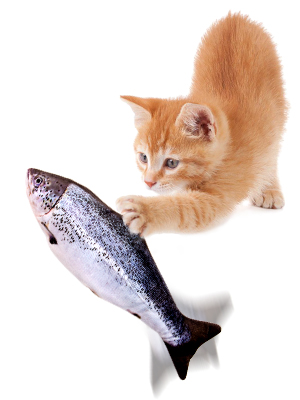 cat plays fish toy