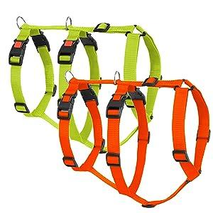 Sicherheitsgeschirr, Orange, Limette, Greyhound Safe it