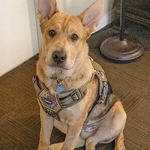indoor dog harness 3