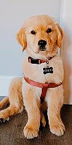 classic dog harness, dog accesories, pet training, dog harness