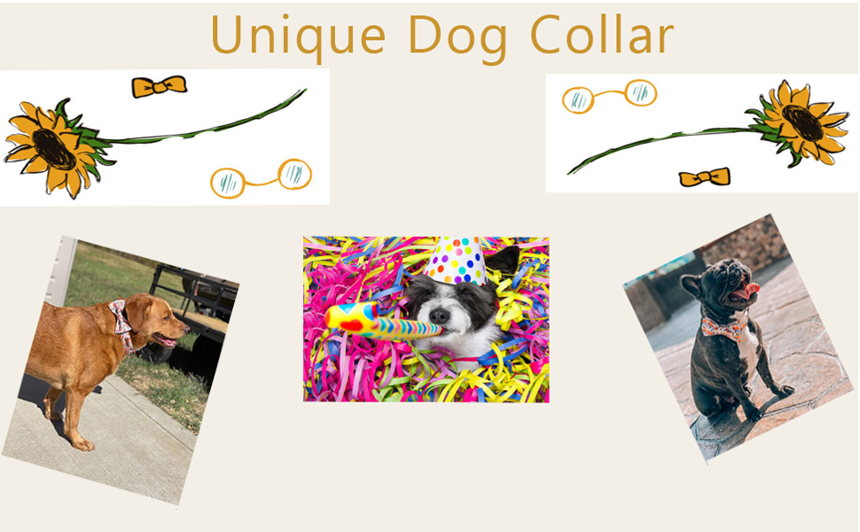Decorate your dog