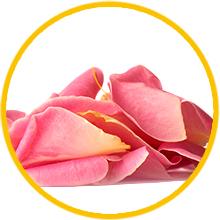 Himalayan roses