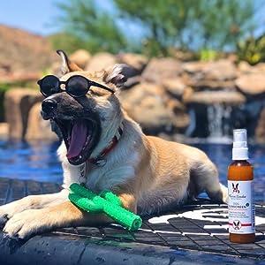 dog sunscreen canada