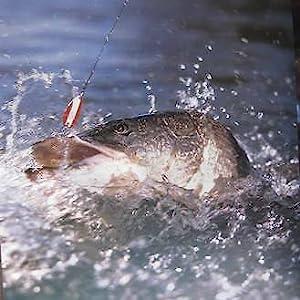 fregito fishing tackle
