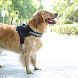 strong dog harness