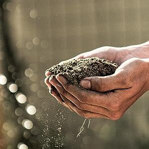 bat guano soil fertilizer