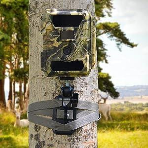 350C trap camera