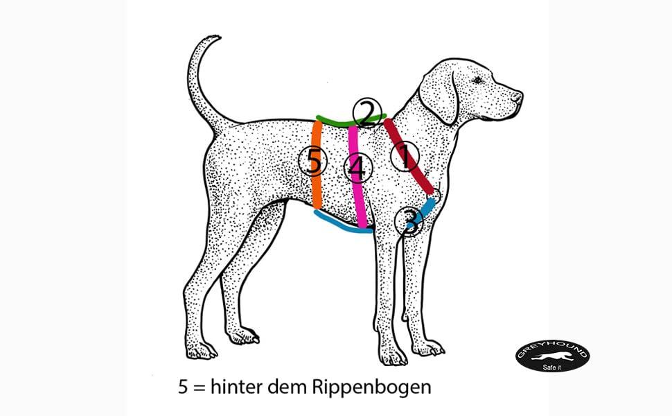 Maße Sicherheitsgeschirr Greyhound Safe it