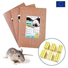 piege a rat glue