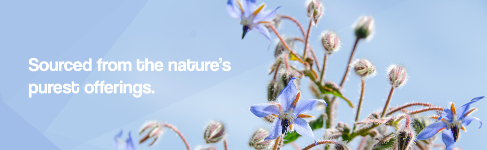Our Borage Oil, made from Borage Seeds, contains natures most concentrated source of GLA