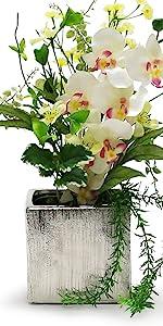 square cube ceramic vase planter terrarium clear glass aquarium liquid