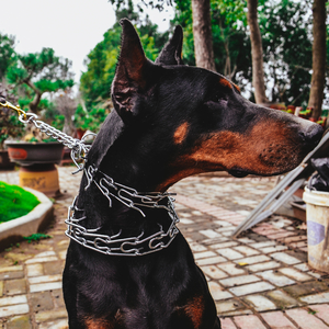 How to choose the right training leash for your dog?