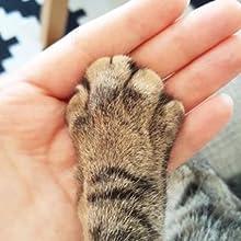 pet paws cat dog balm butter cream petveda