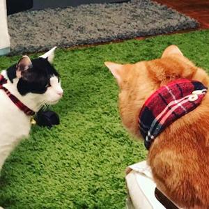 puppy bandana collar