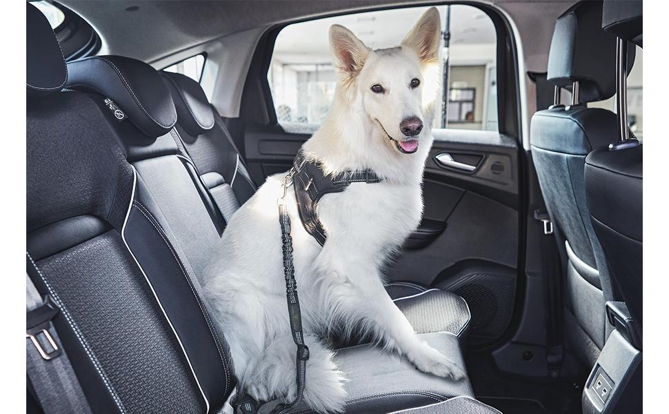 Ceinture sécurité chien terres d'eden