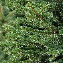 Christmas tree saver reduce needle drop liquid plant food fertilizer green needles evergreen holiday
