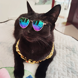 A cool cat wearing the sunglasses and pet collar.