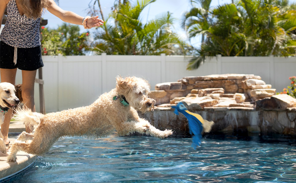 Relieve Anxiety And Keep Dog Happy
