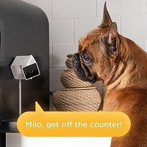 A dog camera