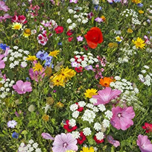 hummingbird butterfly seed mix amazon mountain valley seed company pollinator attracts