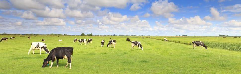 Grass Fed Hormone Free Whey Protein Powders