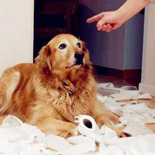 Pets are energetic, Tear down furniture