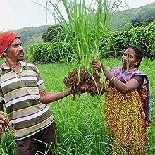 Farmer, Organic, Sustainable, Healthy, Food, Flour
